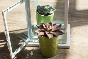 house plants window