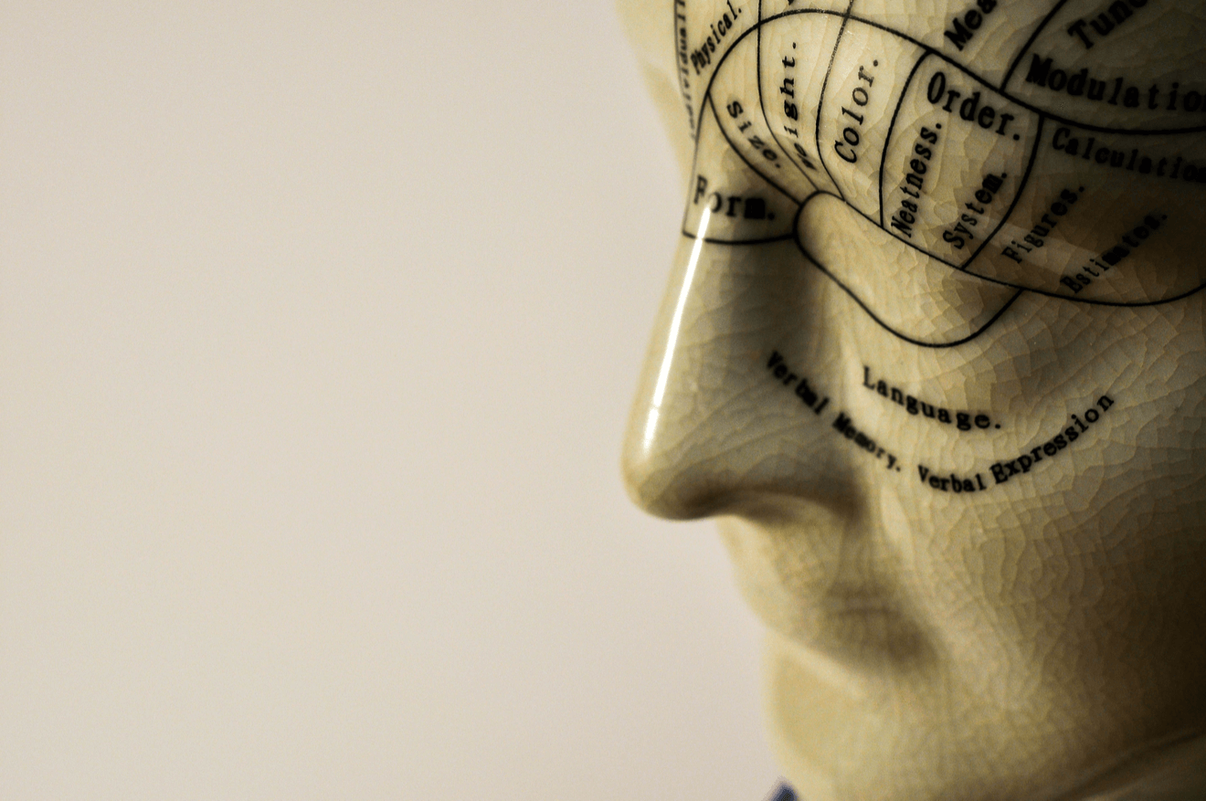 phrenology head in profile