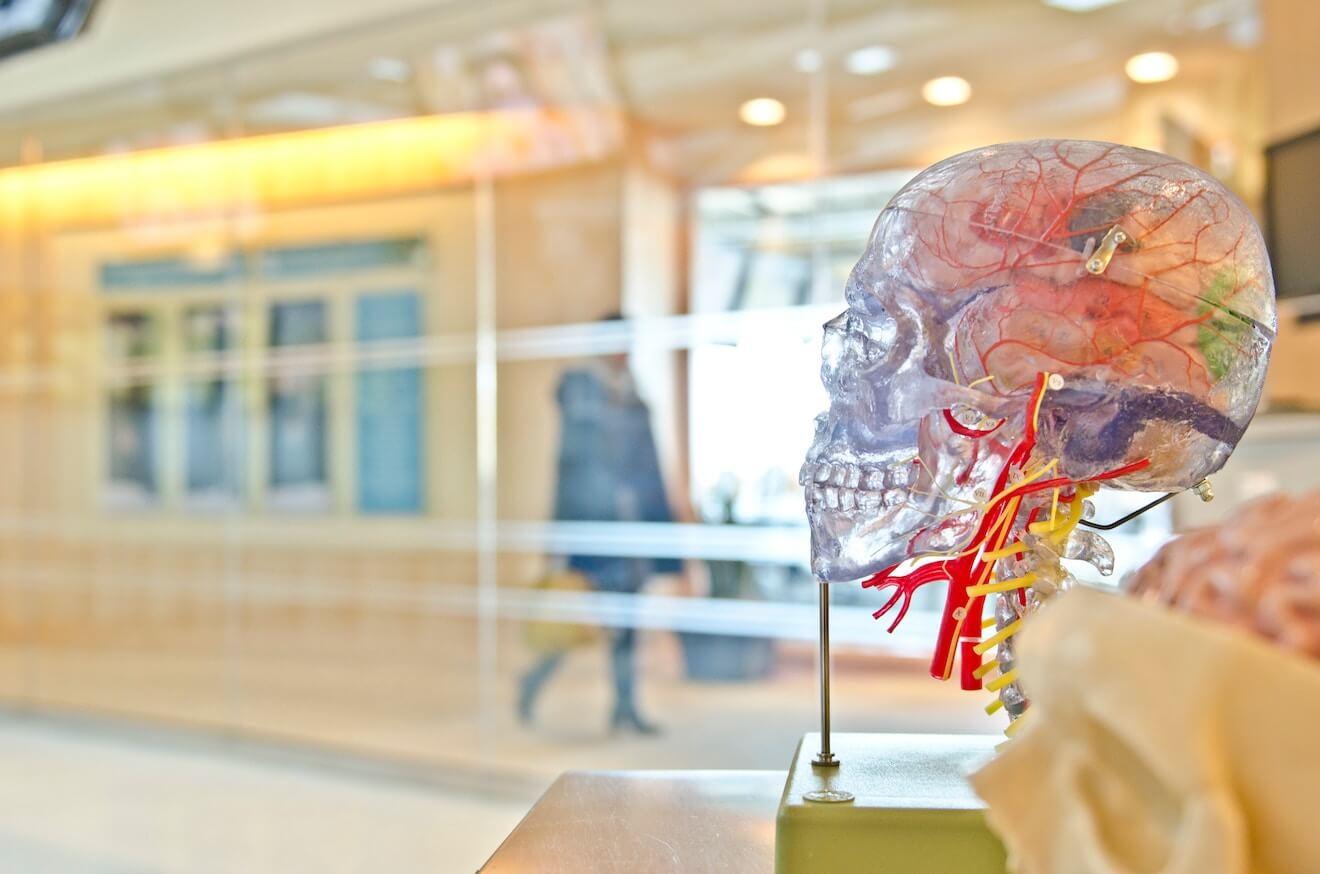 Clear medical model skull by hallway