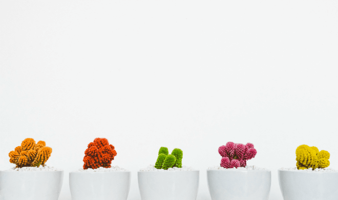 three different colored cacti in white pots on white background
