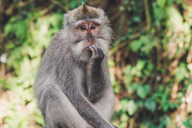 Nervous Monkey