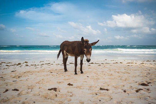 Donkey on a beach