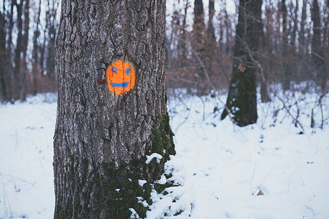 Smiling face painted onto tree