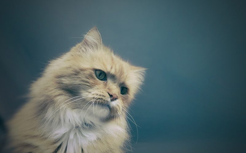 upset cat frowning
