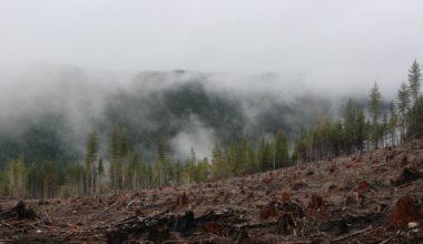earth-day-mental-health-environmental-degradation